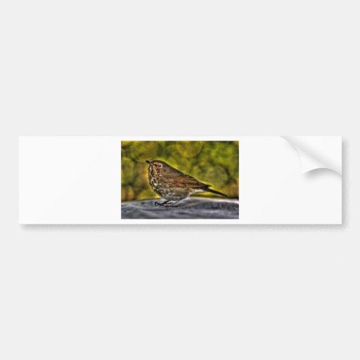 Sparrow of my dreams bumper stickers