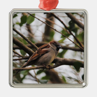 Sparrow on a Branch 2 Silver-Colored Square Decoration