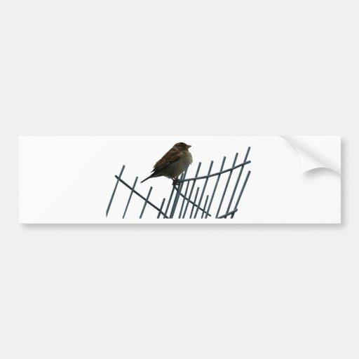 Sparrow on fence - photo bumper sticker