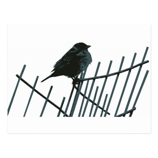 Sparrow on fence - Vector Postcards