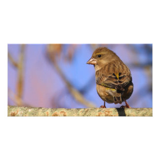Sparrow Personalized Photo Card
