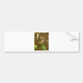 Sparrow Photo Bumper Stickers
