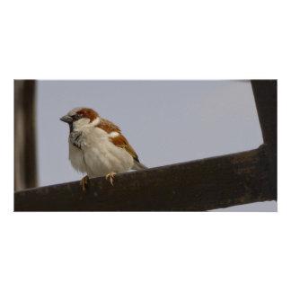 Sparrow Photo Cards