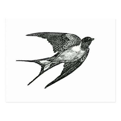 sparrow post card
