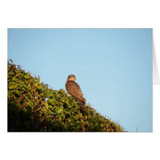 Sparrowhawk Greeting Card