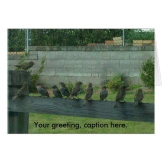 Sparrows Birds on a Rail Your Words Cards