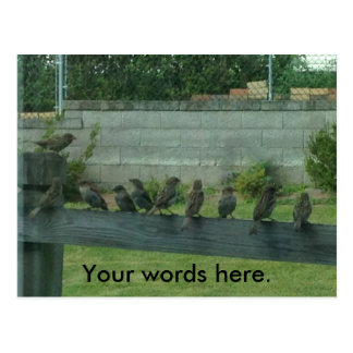 Sparrows Birds on a Rail Your Words Postcards