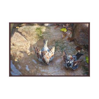 Sparrows Morning Bath Canvas Print