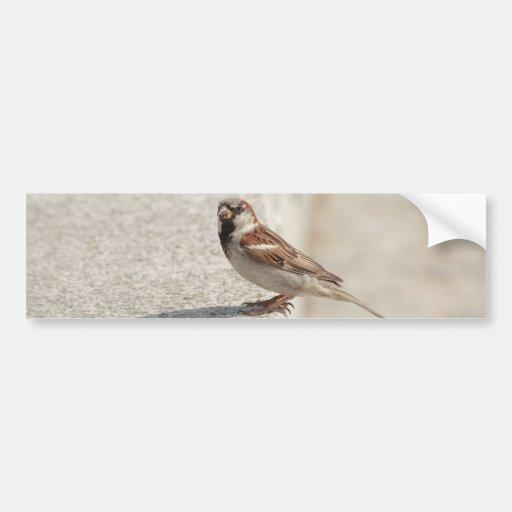 sparrows on the step bumper sticker