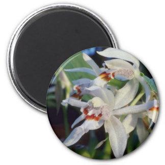 Sparsa (Coelogyne) flowers Magnet
