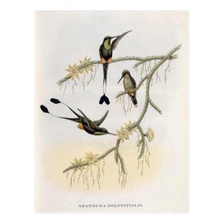 Spathura Solstitialis Postcard