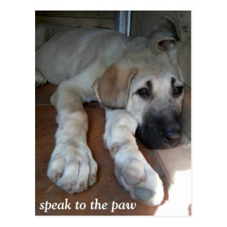 Speak to the paw post cards