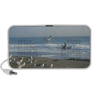 Speaker: Gulls Flying On Beach