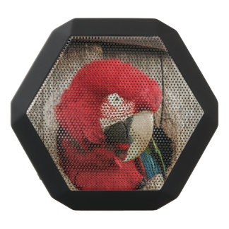 Speaker with green wing macaw parrot in barrel