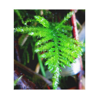 Spear Moss Stretched Canvas Print