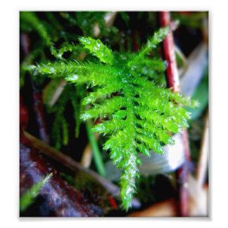 Spear Moss Photo Print