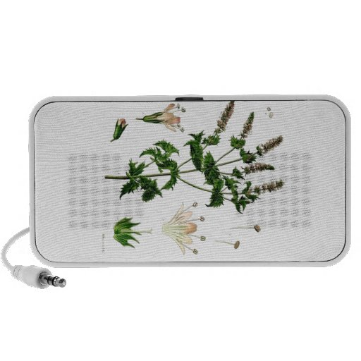 Spearmint Botanical Drawing Portable Speakers