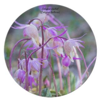 Species: Calypso orchid Plate