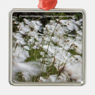 Species: Common cottongrass Silver-Colored Square Decoration