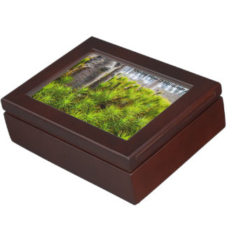 Species: Haircap moss Keepsake Box