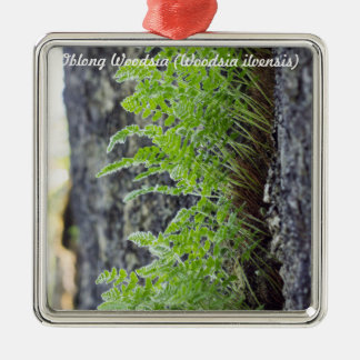 Species: Oblong Woodsia Silver-Colored Square Decoration