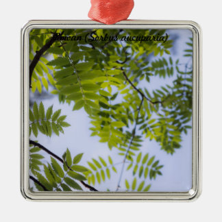 Species: Rowan Christmas Ornament