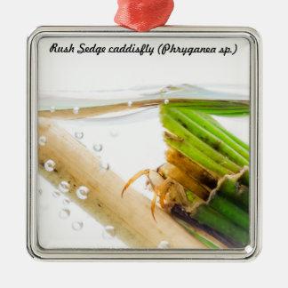 Species: Rush Sedge caddisfly Christmas Ornament