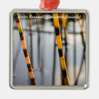 Species: Water Horsetail Christmas Ornament
