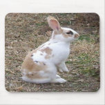 Speckled Bunny Rabbit... Mousepad