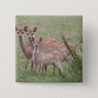 Speckled Deer with Fawn 15 Cm Square Badge