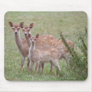 Speckled Deer with Fawn Mouse Pad