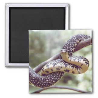 Speckled King Snake Magnet