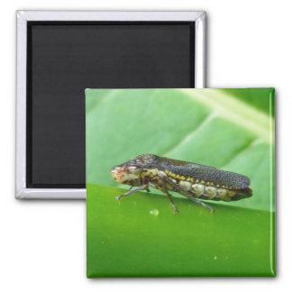 Speckled Sharpshooter Leaf Hopper Items Square Magnet