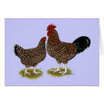 Speckled Sussex Chickens