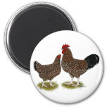 Speckled Sussex Chickens Fridge Magnets