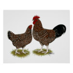 Speckled Sussex Chickens Poster