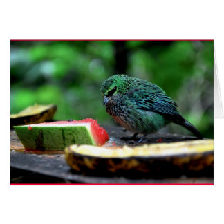 """""""Speckled Tanager"""" Card"""