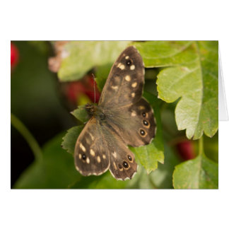 Speckled Wood Butterfly Card