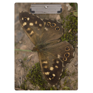 Speckled Wood Butterfly Clipboard