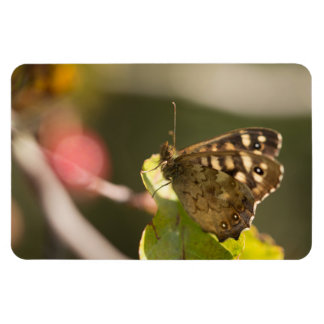Speckled Wood Butterfly Magnet