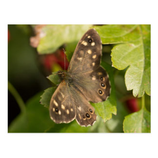 Speckled Wood Butterfly Postcard