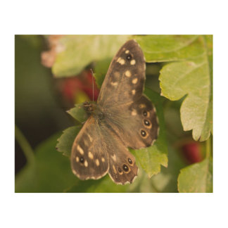 Speckled Wood Butterfly Wood Canvas
