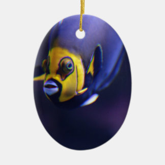spectacled angelfish ceramic oval decoration