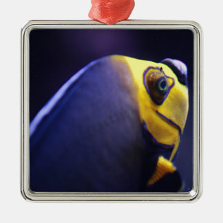 spectacled angelfish ornaments