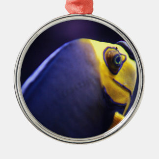 spectacled angelfish Silver-Colored round decoration