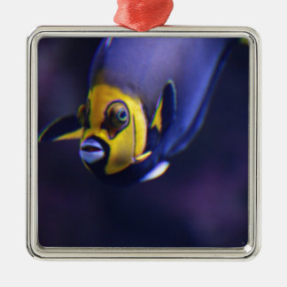 spectacled angelfish Silver-Colored square decoration
