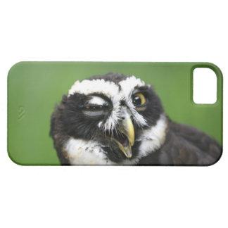 Spectacled Owl (Pulsatrix perspicillata) iPhone 5 Cover