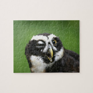 Spectacled Owl (Pulsatrix perspicillata) Jigsaw Puzzle