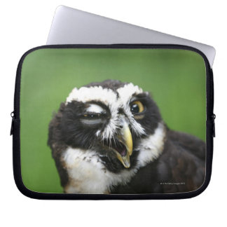 Spectacled Owl (Pulsatrix perspicillata) Laptop Sleeve