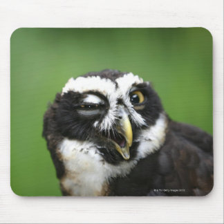 Spectacled Owl (Pulsatrix perspicillata) Mouse Pad